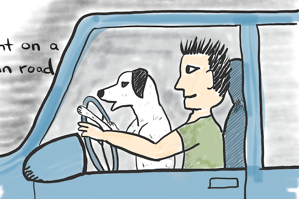 Would you let your dog drive?